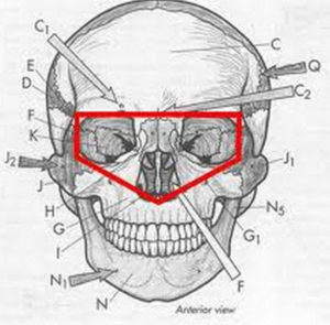 ocular-cavity